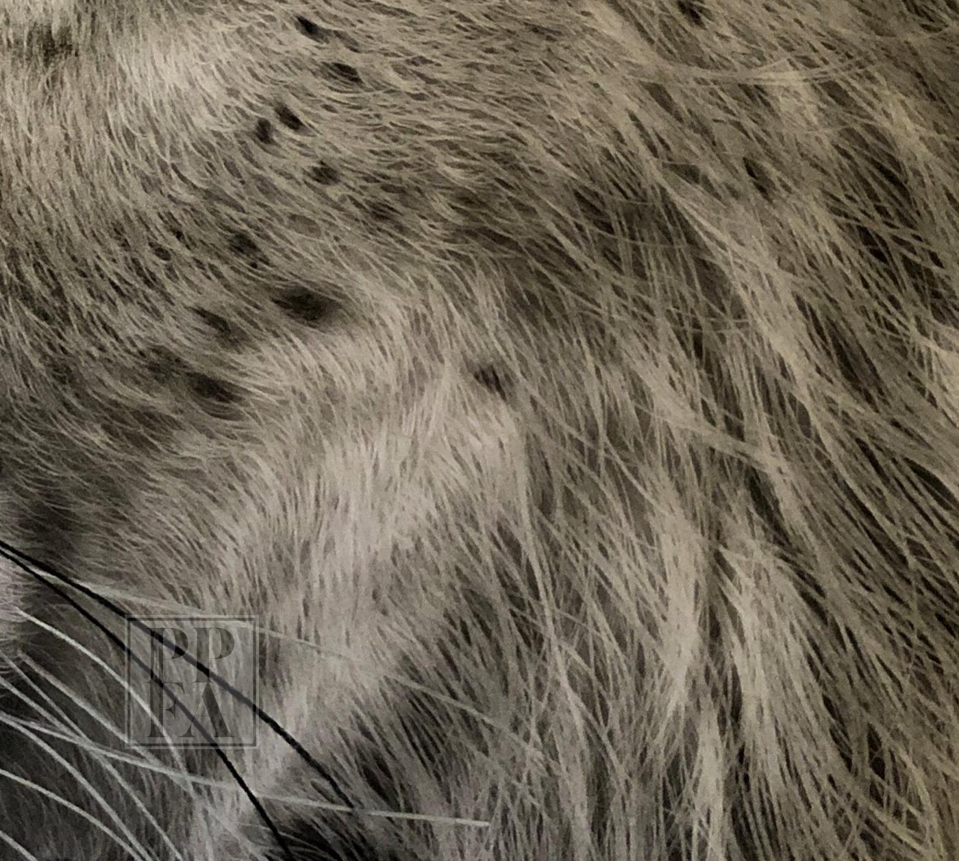 Godknows kingofthejungle fur
